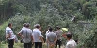 遂昌县林业局举办香榧种植经营管理技术交流学习活动 - 林业厅
