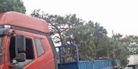 德清县维护木材流通秩序遏制违法运输 - 林业厅