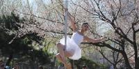 4月25日,长春市杏花村公园内杏花绽放,几名舞者在公园内跳起钢管舞,吸引市民观看。刘栋 摄 - 浙江网
