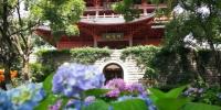 城隍阁绣球花展抢先看 73个品种上万植株约你来拍 - 林业厅