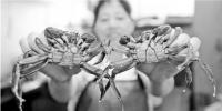 """六月黄、小河虾、汪刺鱼、莲蓬 一年中""""最好吃的西湖""""摆上桌 - 杭州网"""