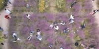 杭州一片种了快三年的粉黛乱子草 三天就被拍照拍抖音踩毁了 - 杭州网