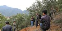 中央林技推广项目——低产油茶多模式更新改造示范与推广项目培训会在湖山林场召开 - 林业厅