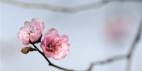 今天放晴 春意渐浓 这些花你能认出几种? - 杭州网
