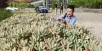 图为:一名华文媒体记者在拍摄多肉植物。 张茵 摄 - 浙江新闻网