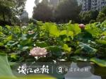 杭州城西的一池荷花 让回迁房有了超过商品房的优越 - 林业厅