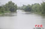 近日连续降雨导致河水水位上涨。 海盐宣传部提供 - 浙江新闻网