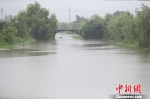 近日连续降雨导致河水水位上涨。 海盐宣传部提供 - 浙江网