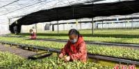 图为:台州市仙居县台湾农民创业园智能育苗基地里,农民们忙着培育幼苗。 王华斌 摄 - 浙江网