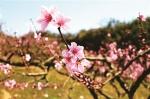 忽如一夜春风来 良渚处处繁花开 - 林业厅