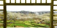 千亩梨花园一景。王健摄 - 浙江新闻网