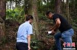 工作人员就近选择在古树林里对其进行放生 龙泉宣传部提供 - 浙江网